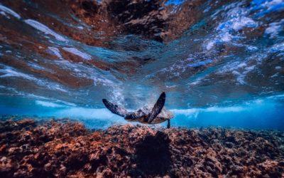 8 Giugno – Giornata Mondiale degli Oceani