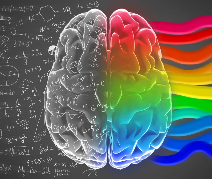 emisferi-cerebrali_900x760